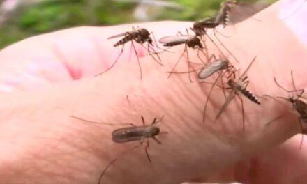 Tájékoztató a szúnyogok gyérítéséről a Balatoni Szövetség tagtelepülései részére