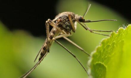 Szúnyogirtás lesz augusztus 11-én